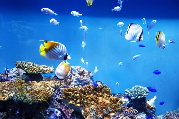 新江ノ島水族館はデートにおすすめ!ショーが可愛くてカップル向き