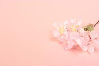 お花見に誘われた!付き合う前のお花見デートの注意点とは?