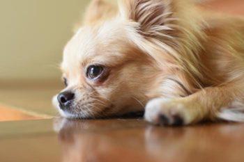【犬好き男子の恋愛傾向】好きなタイプはきちんとしていて従順な女性?