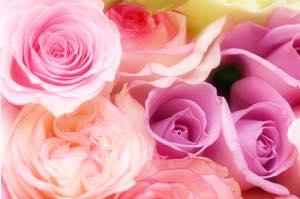 恋愛名言「恋は花」