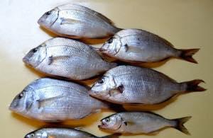 お魚たくさん