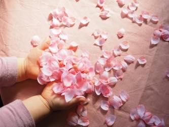 桜の花びらをキャッチ
