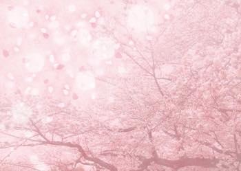 桜の木には神様が宿る